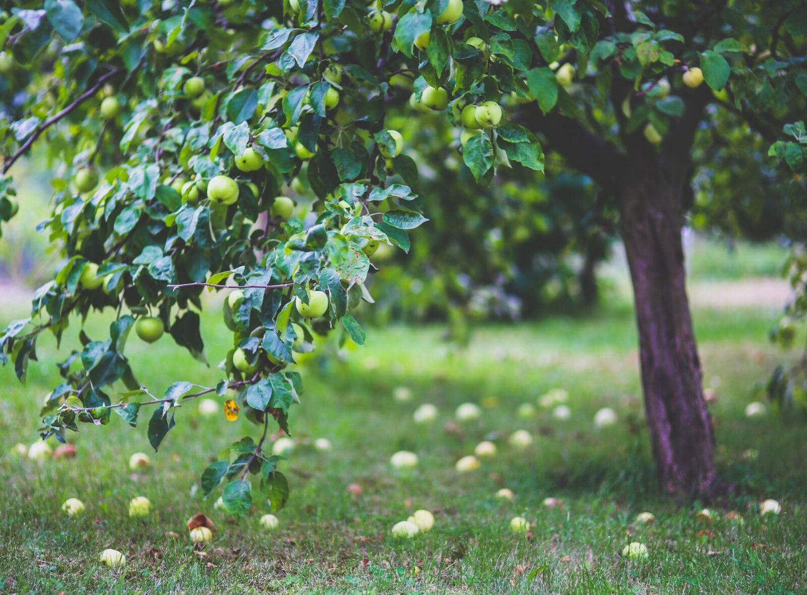 fruitbomen-De-Beste-Verliezer