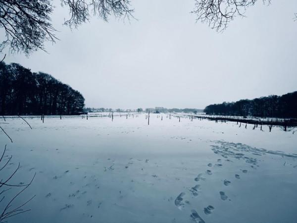 De-Beste-Verliezer-winter-03